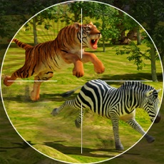 Activities of Safari Hunting – Sniper Shooting
