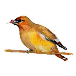 Birds! Watercolor Stickers