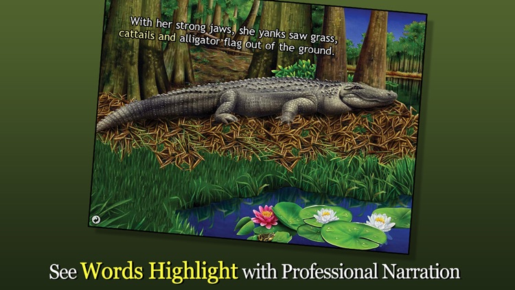 Alligator at Saw Grass Road - Smithsonian's