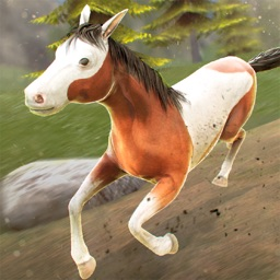 My Riding Wild Horse: The Jumping Adventure