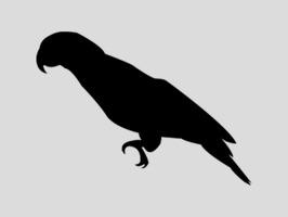 Parrot Sticker Pack!