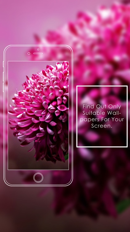 Pink Flowers HD WallPapers & Background Free screenshot-3