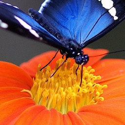 Insect Wallpapers-Best Nature Backgrounds & Images