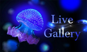 Live Gallery