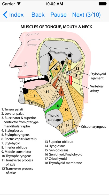 Anatomy Lectures Head and Neck screenshot-3