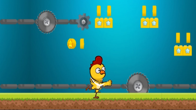 little chicken run