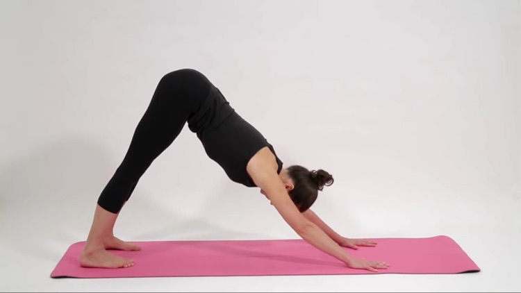 Anatomy & Yoga AR