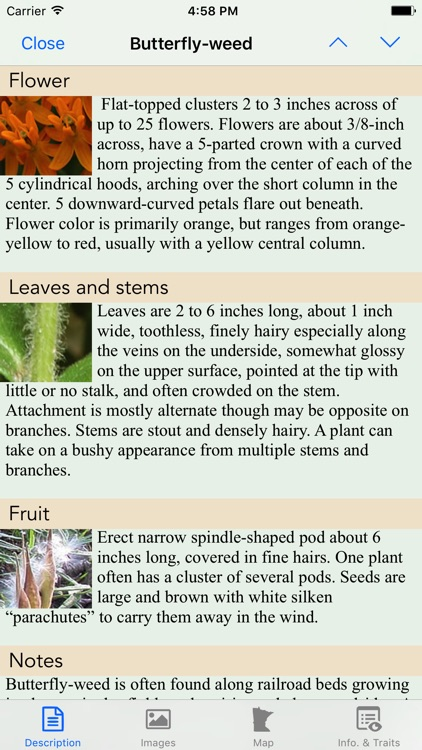 Minnesota Wildflowers Info. screenshot-3