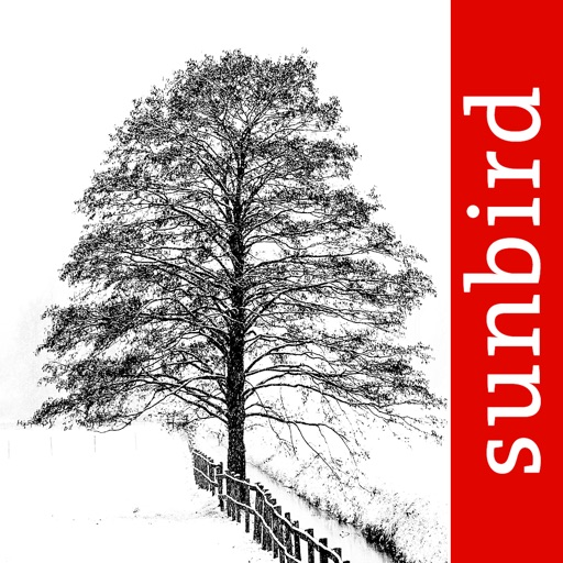Winter Tree Id - British Isles