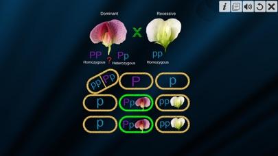 Test Cross: pea flower screenshot 7