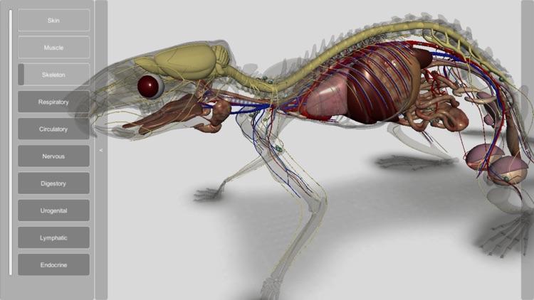 3D Rat Anatomy screenshot-3