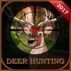 Activities of Wild Deer Sniper Hunting :