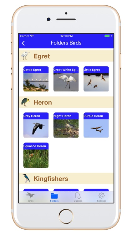 Birds of Jordan 2 screenshot-5