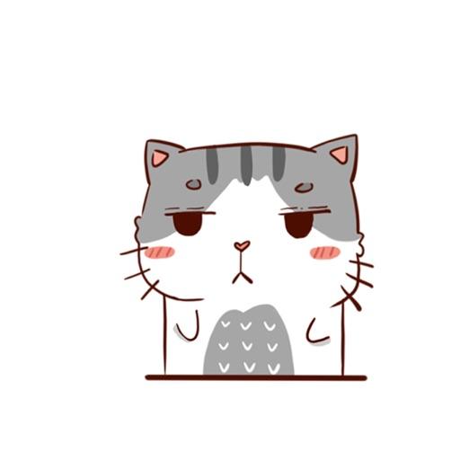 Hui Hui Cat