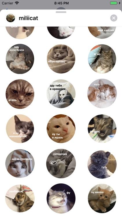 Милые кошки screenshot-3