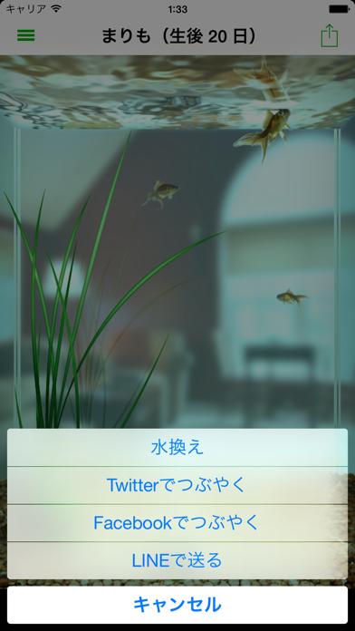 まりも ScreenShot1