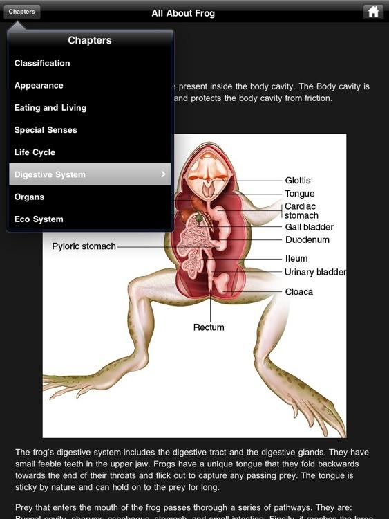 Frog Dissection screenshot-4