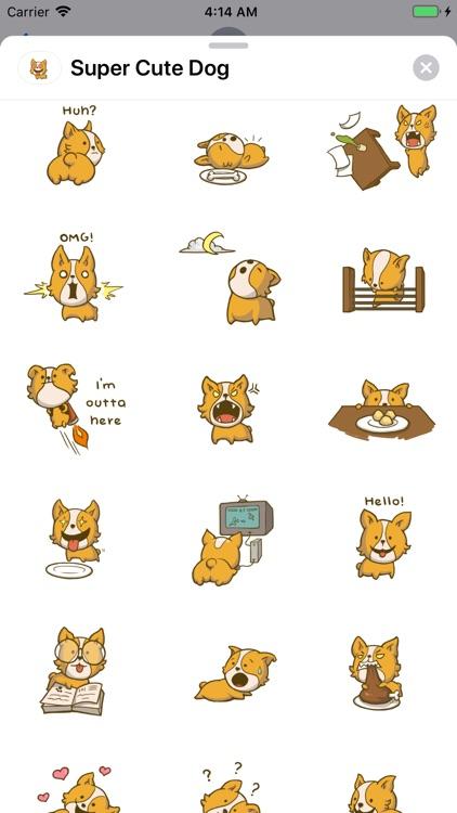 Super Cute Dog - Simbha