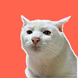 Cat Meme Stickers