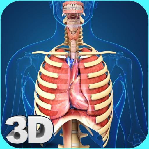 My Respiratory System Anatomy
