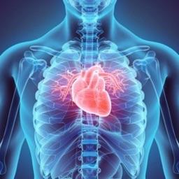 人体解剖学 - 3D解剖教学