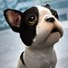 My Puppy Dog: Animal Adventure