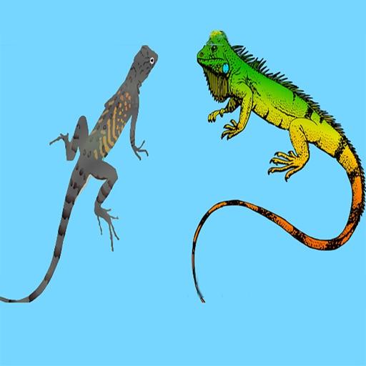 Two Iguanas