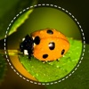 Insect identifier by photo