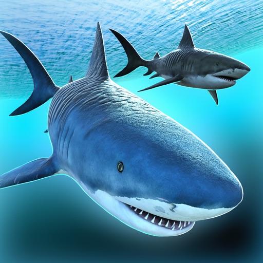 Sea Shark Adventure