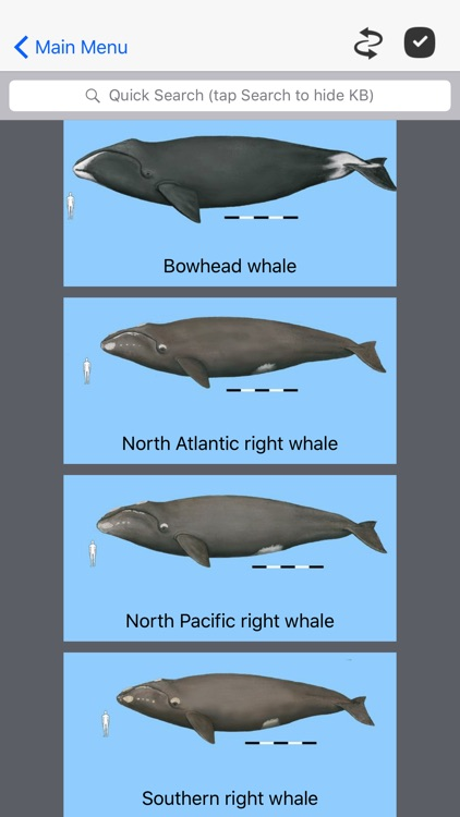 Dolphins and Whales screenshot-0