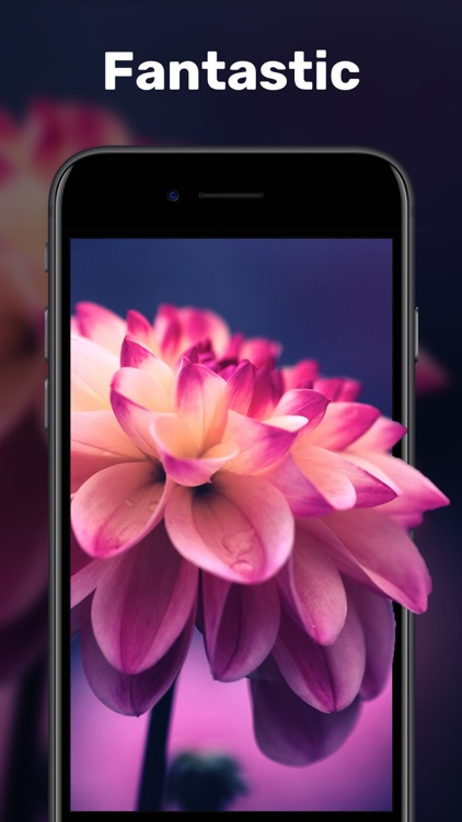 Live Wallpapers & Video Maker