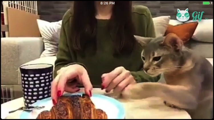 Cat GIF TV screenshot-4