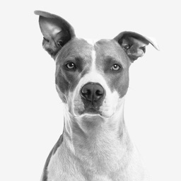 My Dog App - Care my Dog