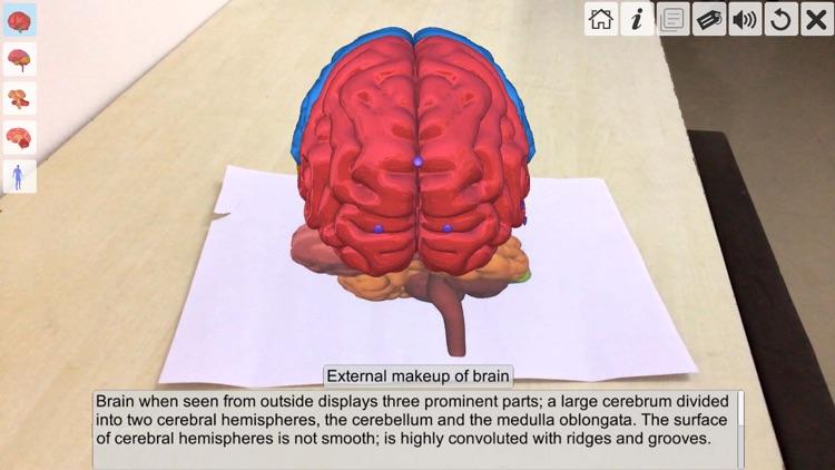 AR Human brain screenshot-3