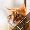 猫クロスワードlite