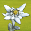 renata caviglia - Alpenblumen Finder – Europa Grafik