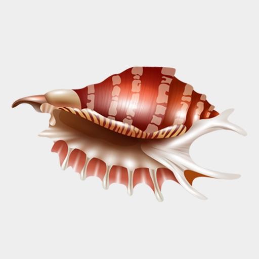 Seashells Ocean Stickers