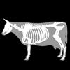 3D Bovine Anatomy