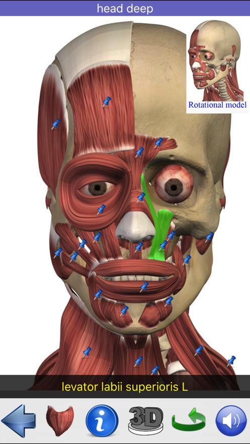 Visual Anatomy】应用信息- iOS App基本信息 应用截图 描述 内购