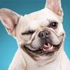 Dog Breed Training: Pet Trivia - iPadアプリ