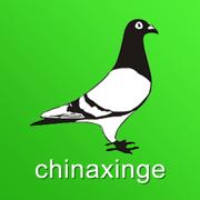 中国信鸽信息网chinaxinge.com