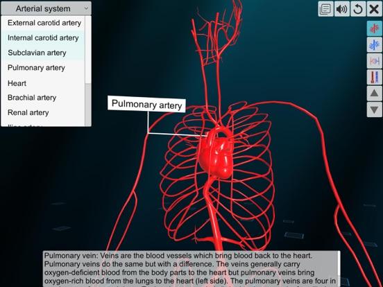 Vascular system screenshot 11