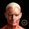 3d人体解剖学-三维运动解剖&经络穴位