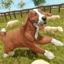 Silly Sheep Run- Farm Dog Game