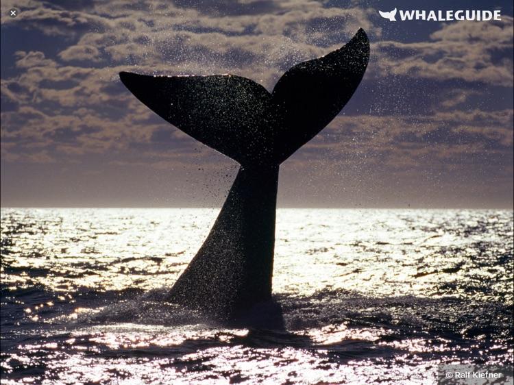 WhaleGuide for iPad screenshot-3
