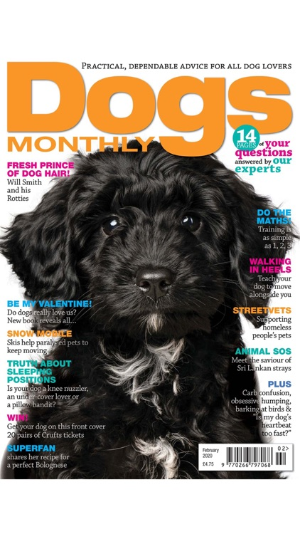 Dogs Monthly Magazine
