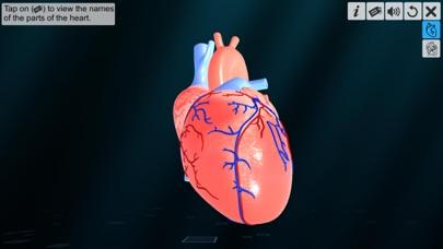 Heart - An incredible pump screenshot 1
