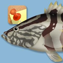 Memory Game Fish
