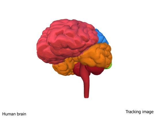AR Human brain screenshot 9