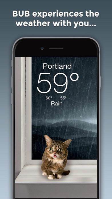 Lil BUB Cat Weather Reportのおすすめ画像2